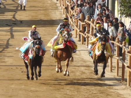 菊間祭り お供馬の走り込み 3