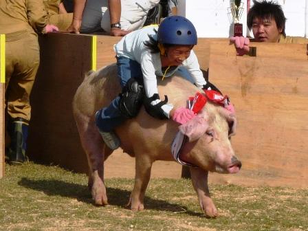 おおにしフェスタ 2011 豚のロディオ 1
