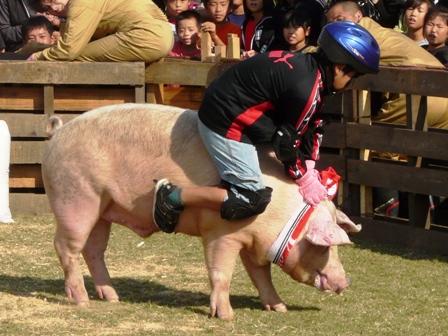 おおにしフェスタ 2011 豚のロディオ 2