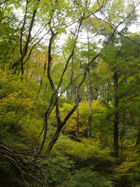 瓶ヶ森林道 紅葉 1