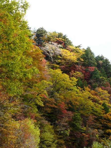 瓶ヶ森林道 紅葉 3