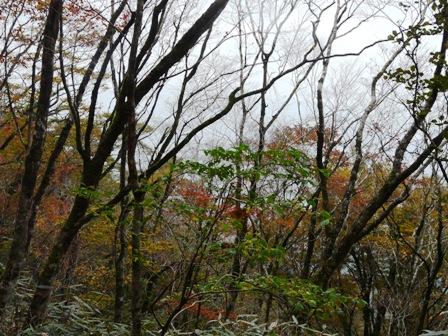 秋の四国カルスト 3