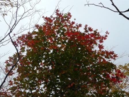 秋の四国カルスト 4