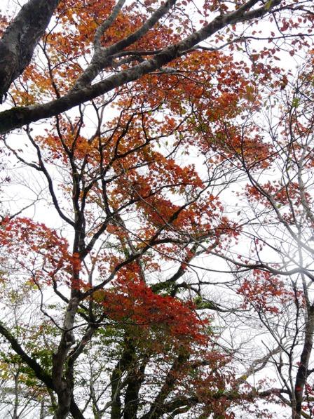 秋の四国カルスト 5