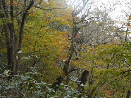 秋の四国カルスト 6
