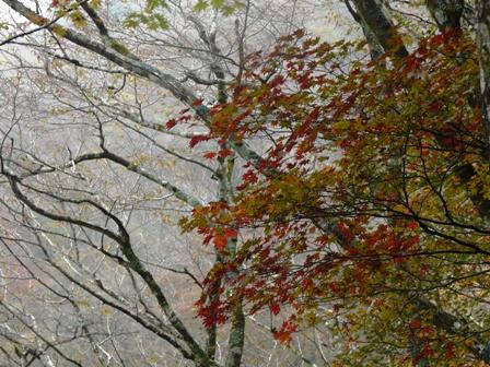 秋の四国カルスト 7