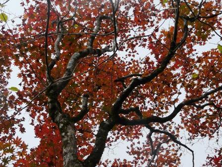 秋の四国カルスト 8