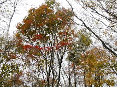 秋の四国カルスト 9