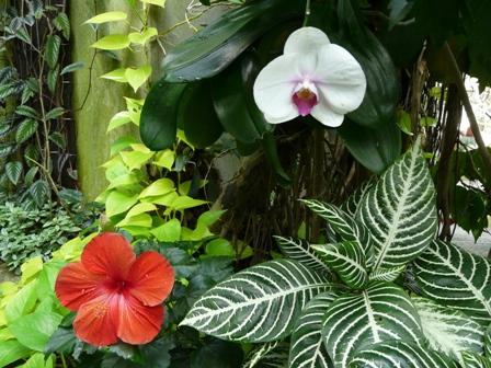 牧野植物園 温室 1