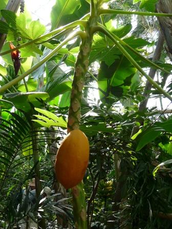 牧野植物園 温室 2