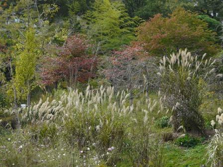 牧野植物園 37