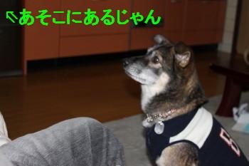 IMG_0497_1.jpg