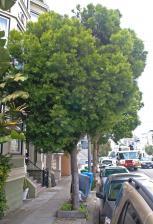 treeAdam.jpg