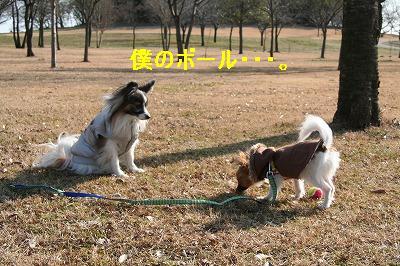 s-IMG_7107_20100105215909.jpg