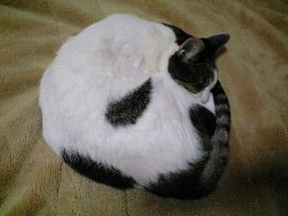 陰陽魚太極図ネコ