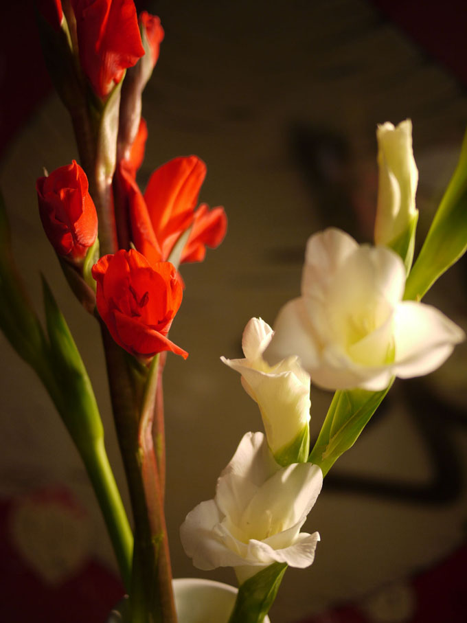 バレンタイン RANGO ジェームスディーン ジミー ディーン ハリウッド オークション AMBER TART OPTICAL ステットソン ウィペット STETSON ジョニーデップ タート アーネル オプティカル パイレーツオブカ