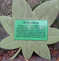 宝塚箕面 137