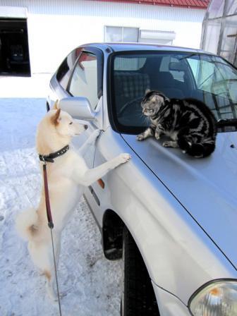 かーちゃんの車の上はやめてくれたまえ