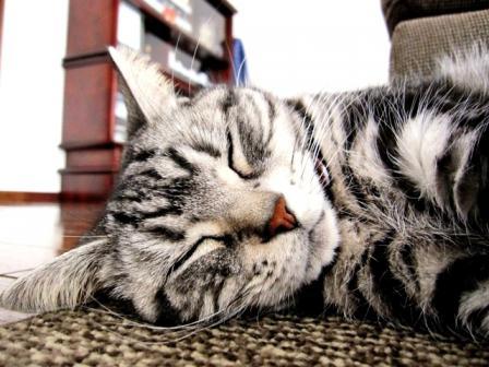 寝てると可愛いのよねー