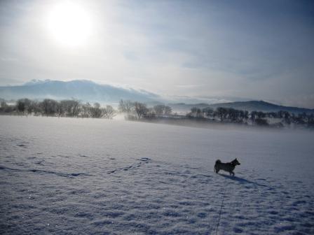 雪もキラキラ