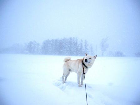 湿った雪に横殴りの風なので