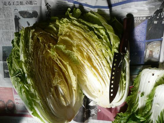 白菜の臭覚 10,1,9 001