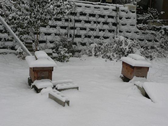 新春の雪 10,1,13 013