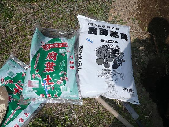 白鳳・白桃を植える 10,2,24 007