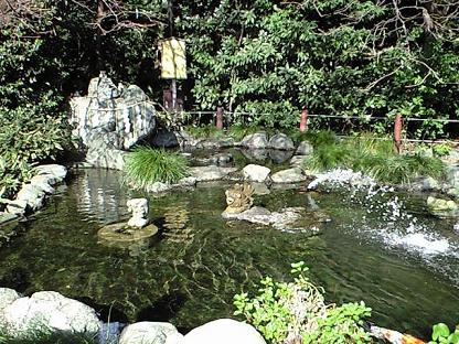 櫻木神社 お池