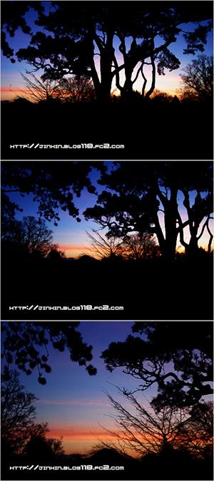 view300.jpg