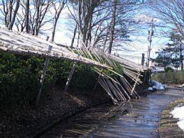 20110221park.jpg