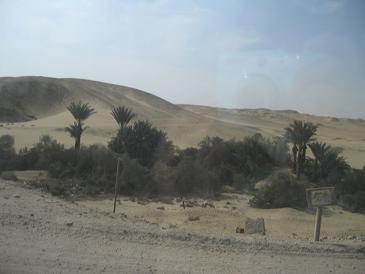 エジプト旅行:メンフィス バスの窓から①