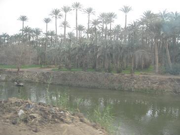 エジプト旅行:メンフィス バスの窓から②