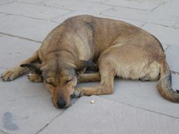 エジプト旅行:カルナック神殿 犬②
