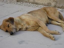 エジプト旅行:カルナック神殿 犬