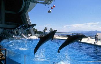marine world uminonakamichi