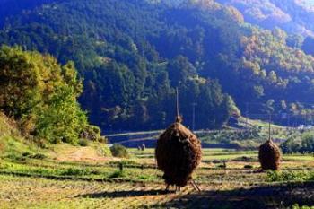 2008+明日香村