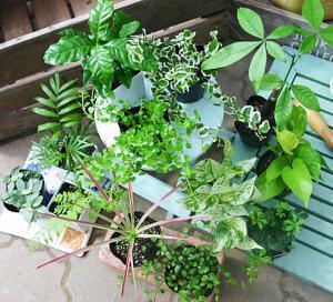 green_20110615.jpg