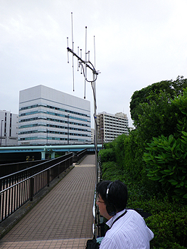 ant-4.jpg