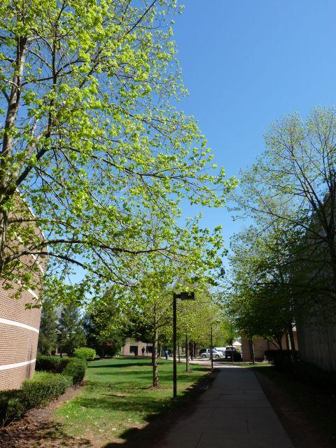 RU_SpringTrees2010.jpg