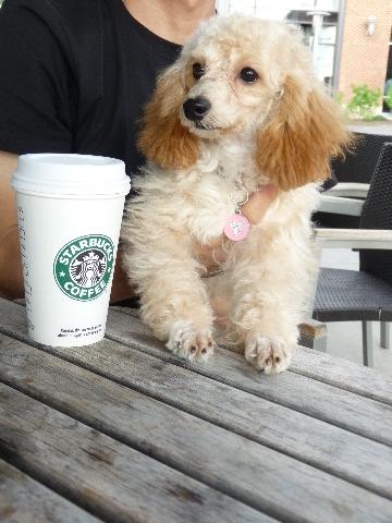 StarbucksCafe_Pixie_100808.jpg