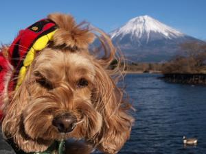 富士山とヨハン2