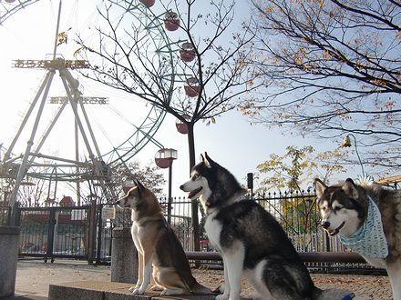 ワンコ達とあらかわ遊園