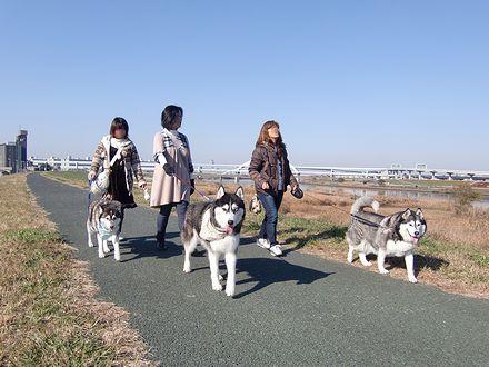 荒川土手を散歩
