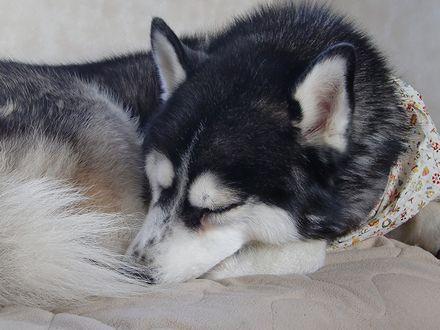 寝てる北斗