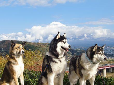 富士山と3頭