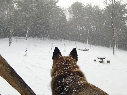 降る雪を見るジョン