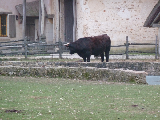 vache.png