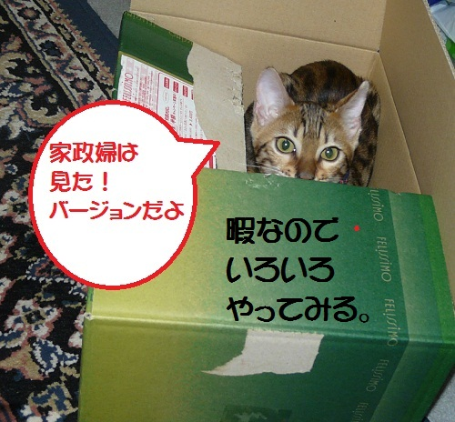 4P1310324.jpg