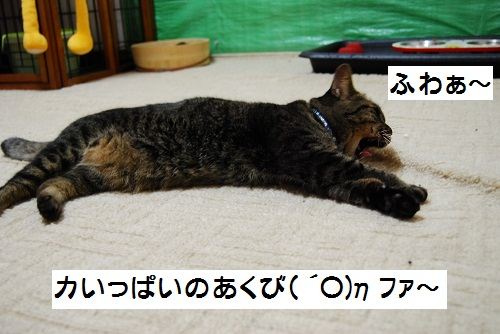 DSC_0009-2.jpg